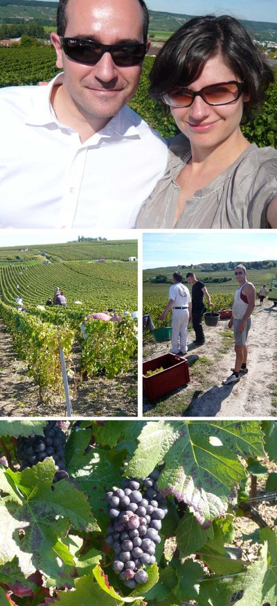 Champagne vineyards, vendanges, grape, France, travel, Myriam Thibault (via Mytinerary blog Detours)
