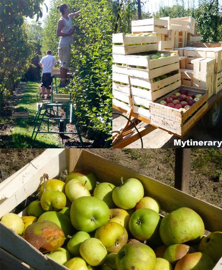 Versailles Palace Kitchen Garden, France, travel (via Mytinerary blog Detours)