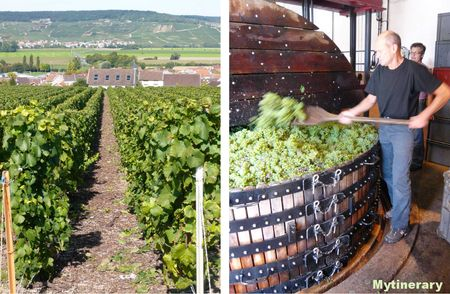 Champagne vineyards, vendanges, grape, France, travel (via Mytinerary blog Detours)